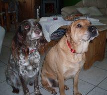 Susi und Charly