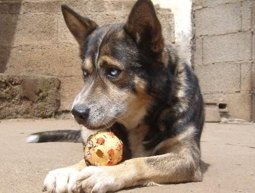 Hunde Suchen Ein Neues Zuhause-Virgil-aktuell