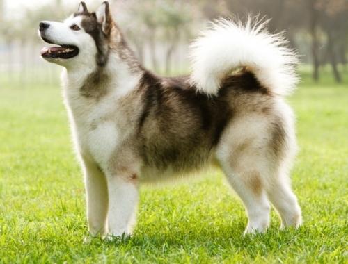 Eine Neue Hunderasse In Unserer Datenbank