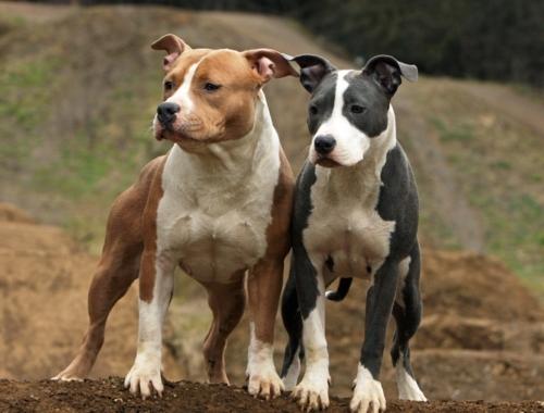 Erweiterung Unserer DNA-Datenbank Mit Neuer Hunderasse