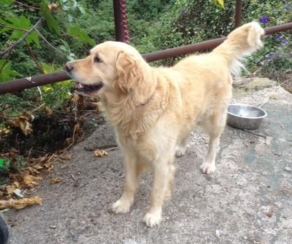 Hunde Suchen Ein Neues Zuhause-Clifford