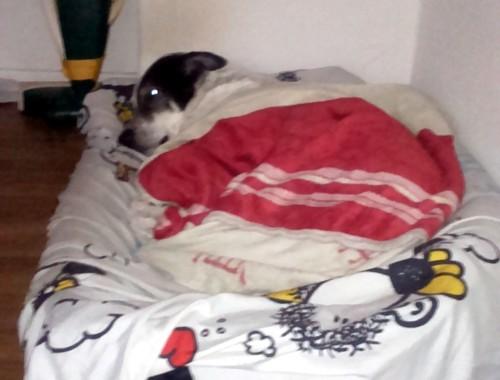 Snoopy2 Canivaris