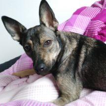 Duke3-canivaris Hunde DNA Test