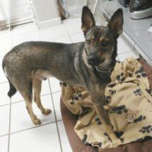 Duke5-canivaris-Hunde DNA Test