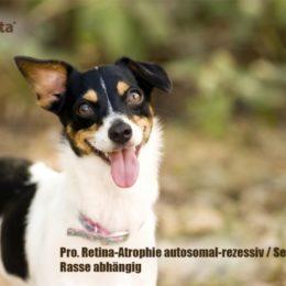 Progressive-Retina-Atrophie-prcd-PRA-Orivita