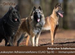 Stoffwechselerkrankung Belgischer Schäferhund-Malinois