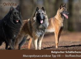 schaeferhund-belgisch-mucopoly