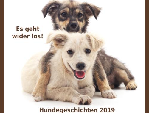 Lernen Sie Unsere Hunde Hinter Den Analyseergebnissen Kennen!