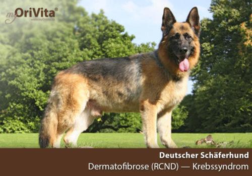 OriVita Diagnostik-Gentest Deutscher Schäferhund