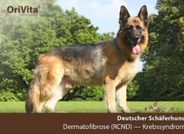 Gentest Deutscher Schäferhund- Dermatofibrose-Krebssyndrom