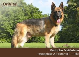 Genetest Deutscher Schäferhund-Hämophilie A (Faktor VIII)-Blut