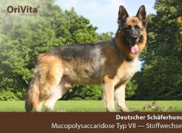 Genetest Deutscher Schäferhund-Mucopolysaccharidose Typ VII